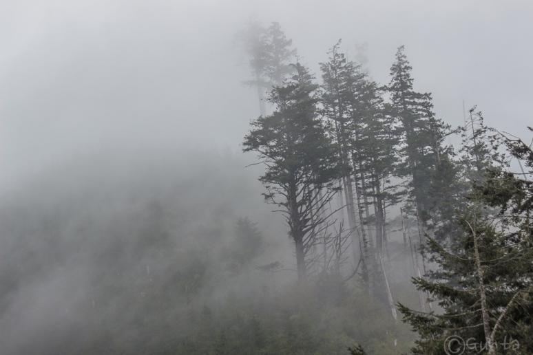 fog-3174