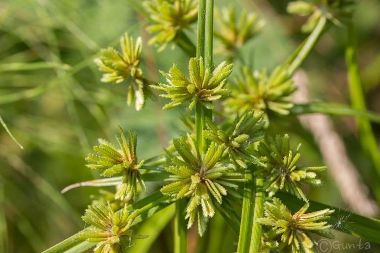 plant-3084