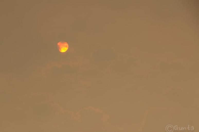 smog-2962