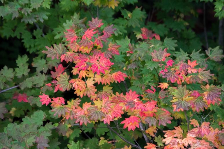 autumn-3531