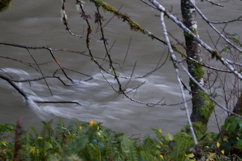 creek-3889