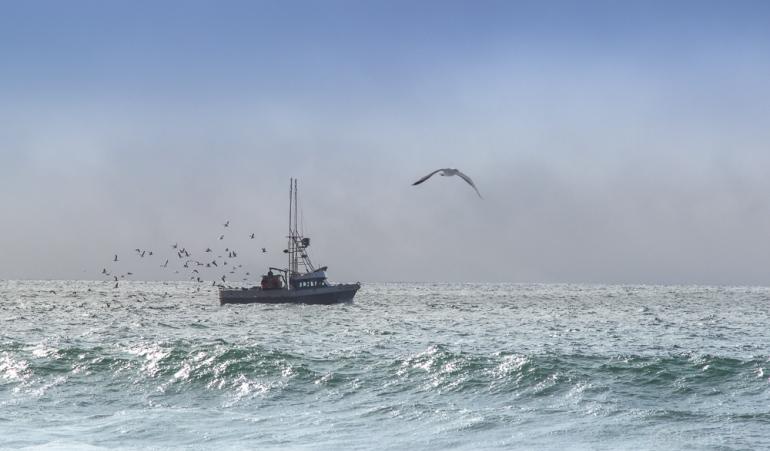 boats-