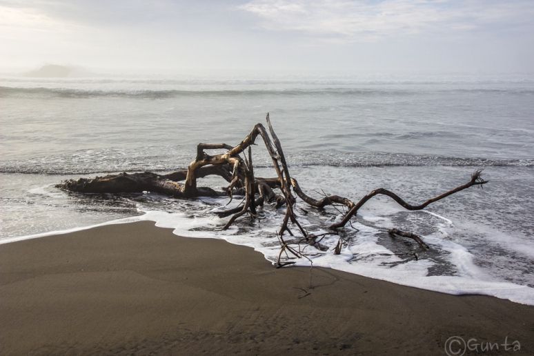 driftwood-4648