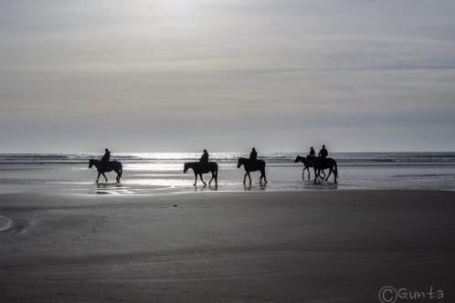 horses-1547