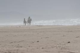 horses-9252