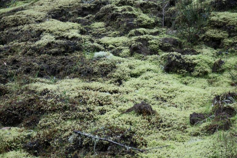 moss life-00230