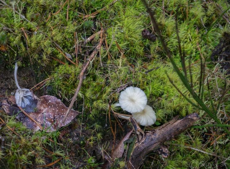 moss life-00234