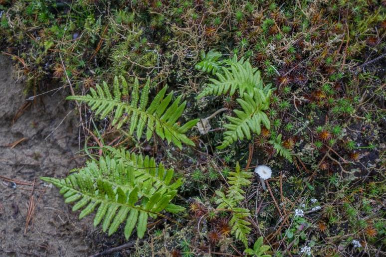 moss life-00235