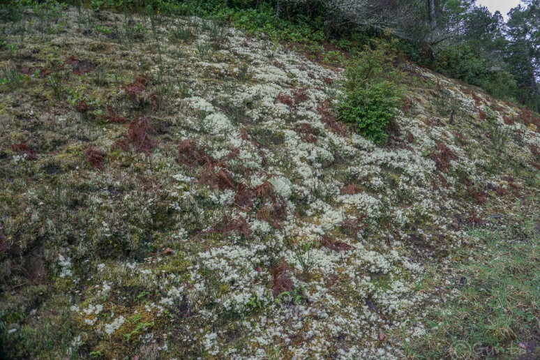 moss life-00236