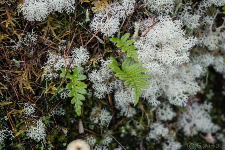 moss life-00247