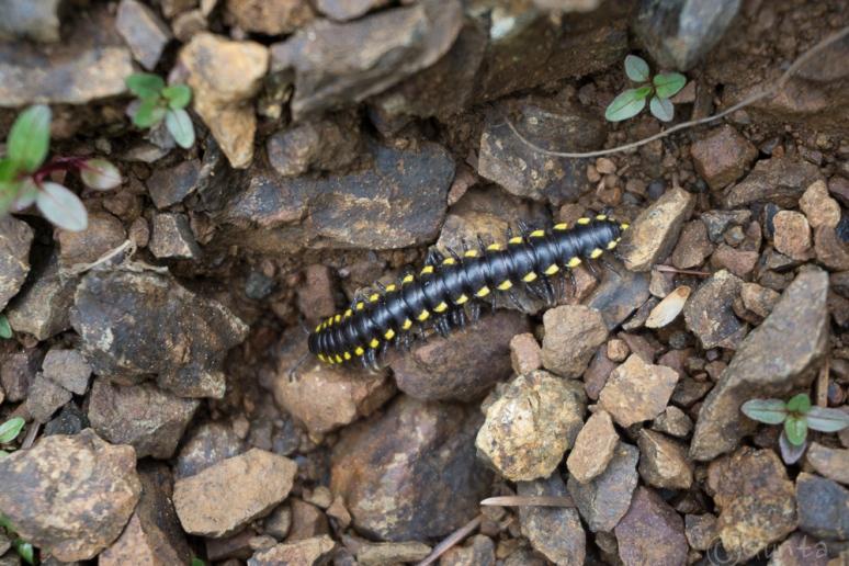centipede-01055