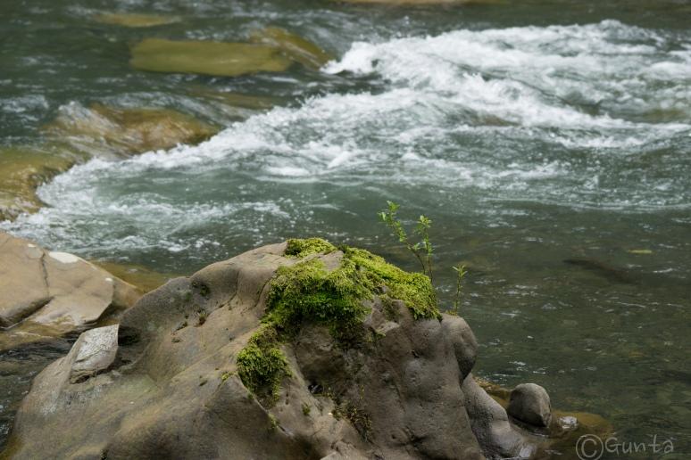 creek_walk-01800