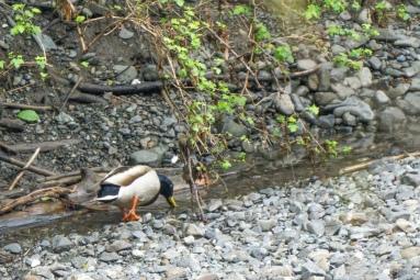 creek_walk-01841