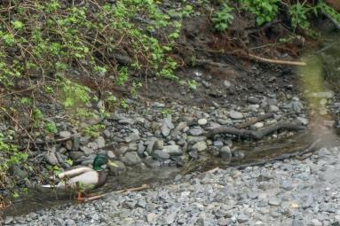 creek_walk-01842