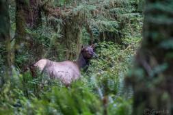 11-an elk encounter