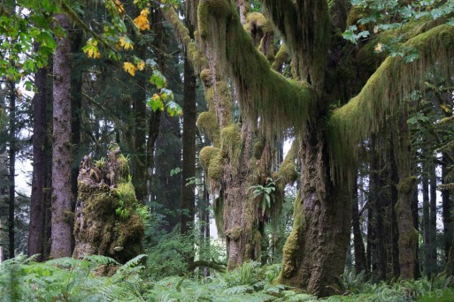 10- Dr Seuss trees with their hanging mosses