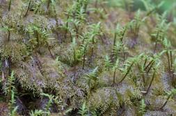9- a mass of mosses