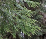 12- overhead branches protecting us from (and occasionally showering us with) the previous night's rain
