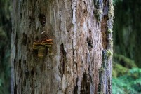 11- all things growing on the old growth trees