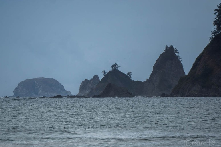 Pacific_NW-06756