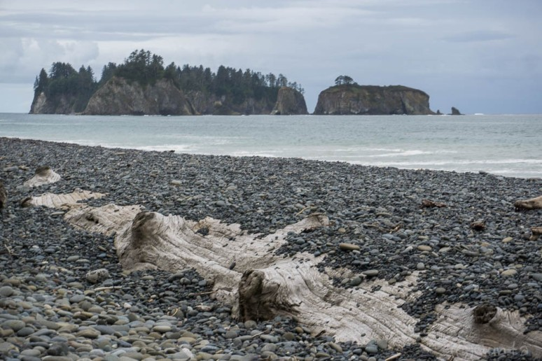 Pacific_NW-06880